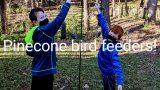 Birdfeeder pic